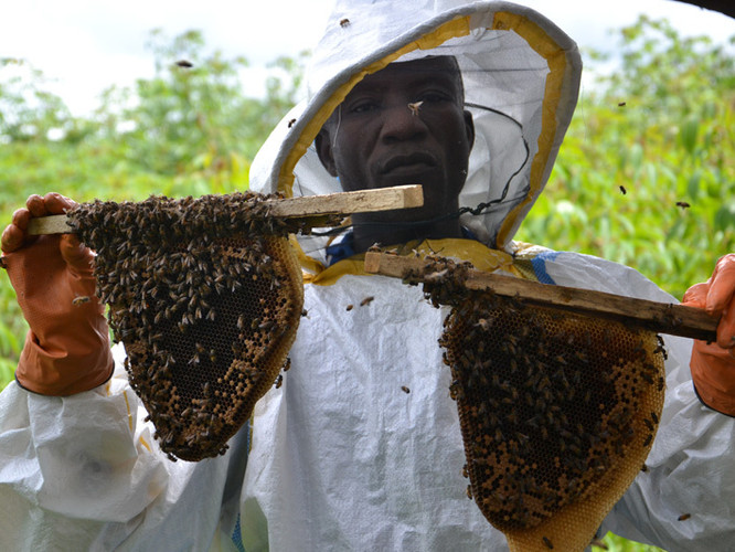 New beekeeper