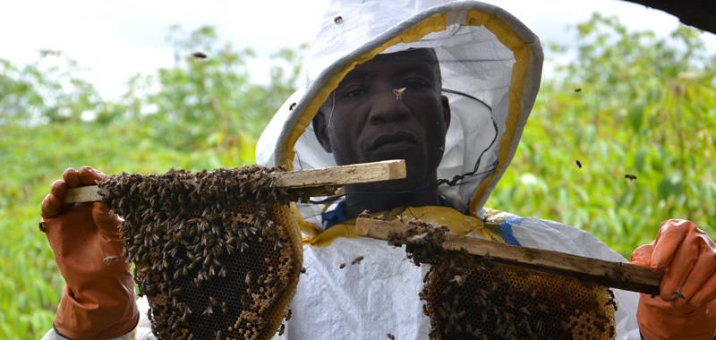 Beekeeper training 2013