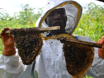 Beekeeper training program