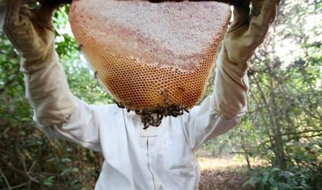 Mature honey comb