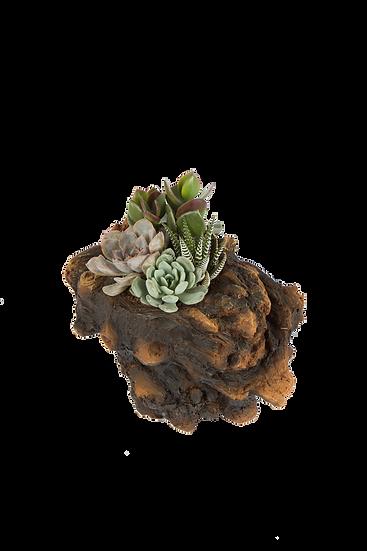 Yuma X Forest