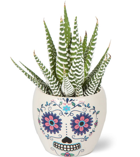 Succulent X Day of the Dead