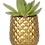 Thumbnail: Succulent X Pineapple
