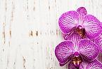 Bloom Life.jpg