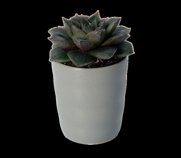 Succulent X Designer
