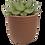 Thumbnail: Succulent X Moroccan