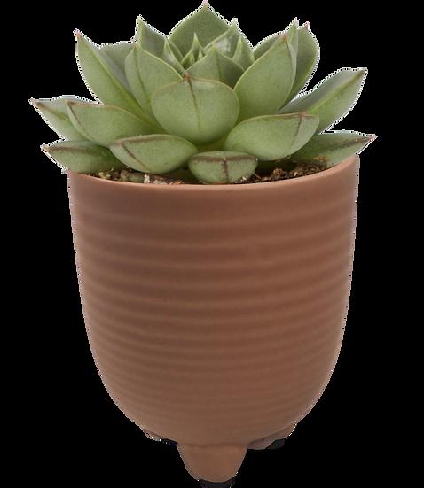 Succulent X Moroccan