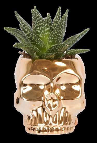 Succulent X Skull