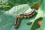 Pest Diseases.jpg