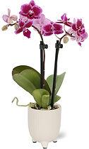 floraconcepts_image_1564680737.jpg