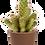 Thumbnail: Cacti X Moroccan