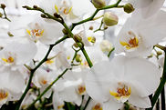 orchids_002_lg.jpg