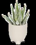 floraconcepts_image_1563458731.png