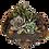 Thumbnail: Yuma X Forest