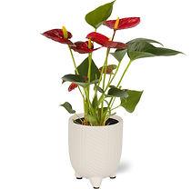 floraconcepts_image_1564519852.jpg