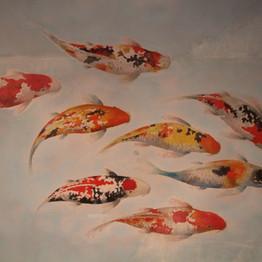 Les carpes koï du restaurant - - Restaurant Yume Sushi Strasbourg