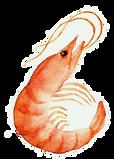 Crevette.png