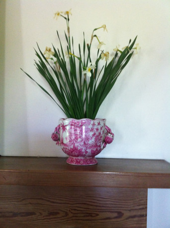 Spring bulbs brighten up any room. Asheville interior designer Jordan Chatham, The Chatham Collection, Timeless Vintage Finds and Interior Design