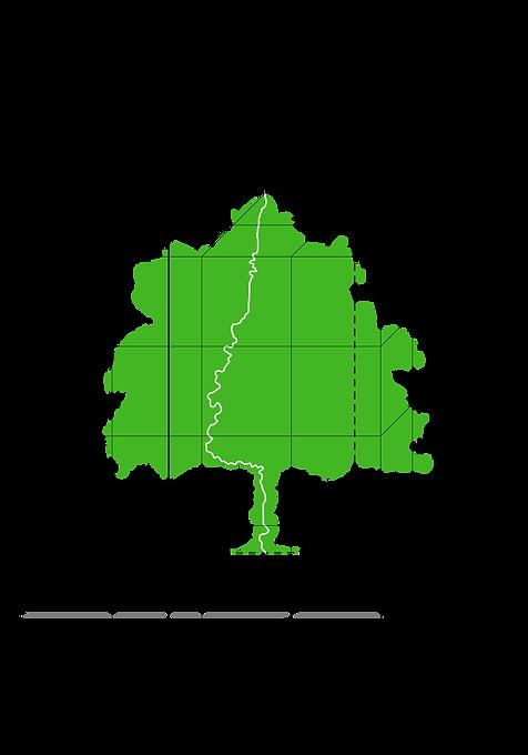 albero architetto copia.png