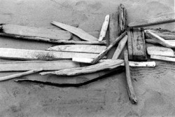 Driftwood assemblage