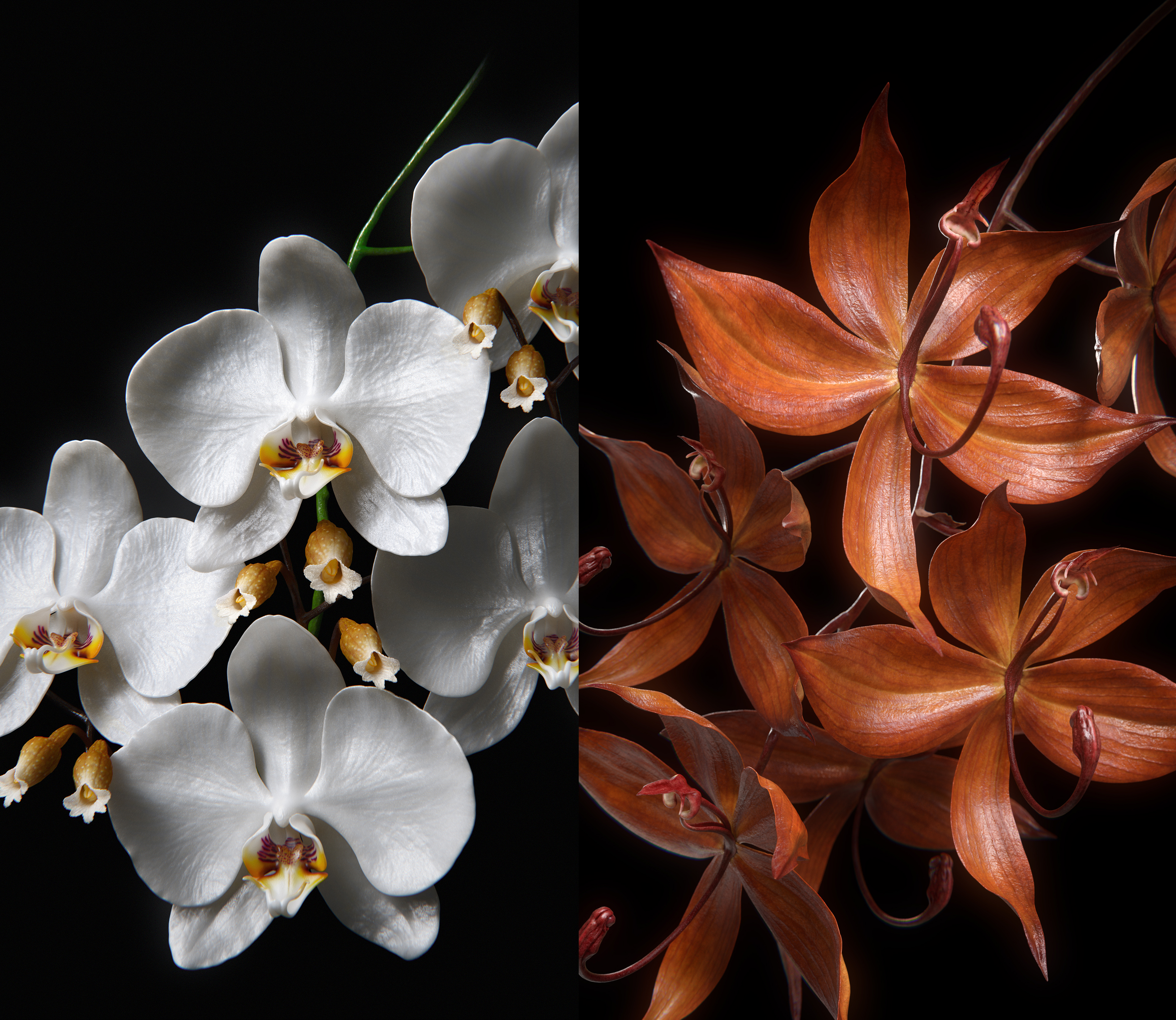 Guerlain Orchidée Series