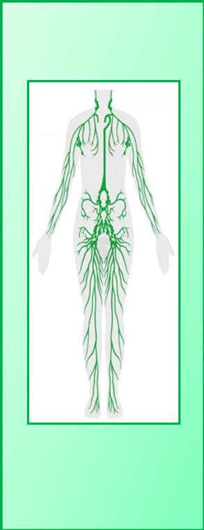 Nature_et_vous_schéma_circuit_lymphatique