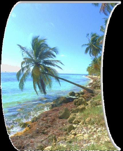Nature_et_vous_Guadeloupe