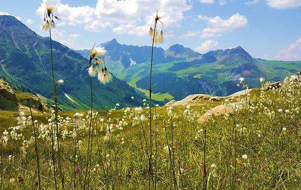 Nature_et_vous_Fleurs_de_montagne
