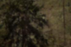 AMS - Utvalda Altorpskogen-7.jpg