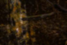 AMS - Altorpsskogen 2-1.jpg