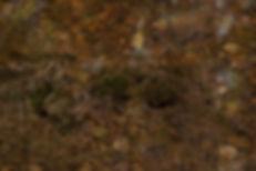 AMS - Utvalda Altorpskogen-5.jpg