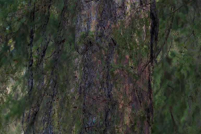AMS - Altorpsskogen 3-1.jpg