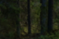 AMS - Utvalda Altorpskogen-3.jpg
