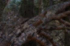 AMS - Altorpsskogen 1-1.jpg