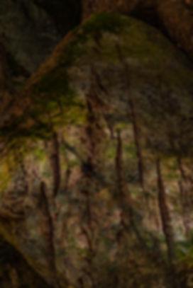 AMS - Altorpsskogen 4-1.jpg
