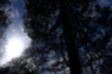 AMS - Bildserie parvis-13.jpg