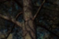 AMS - Utvalda Altorpskogen-4.jpg