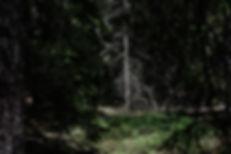 AMS - Bildserie parvis-12.jpg