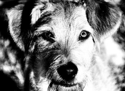 Goede doelen-actie hondenschool Hond&Vorming