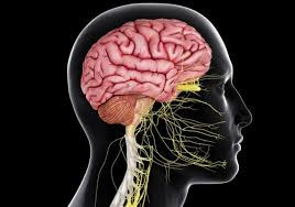 Changing the Brain-Body Connection with a Den Haag Chiropractor