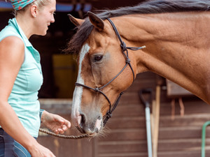 Taking a Good Look at Your Horse - Standing