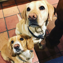 These two 😍😍😍 #thebestdogeverisonther