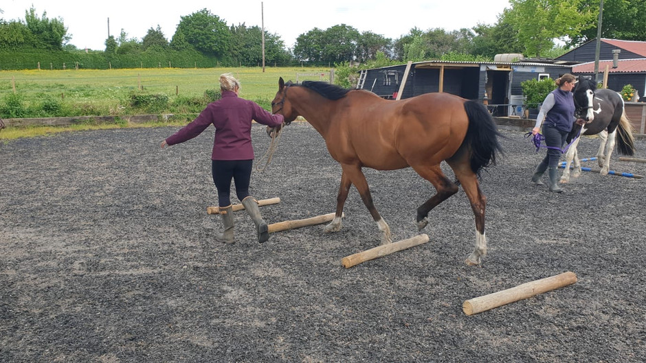 The Unsung Athlete - Horses get DOMS too!