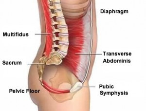Core Strengthening - Back to Basics! The Anatomy.