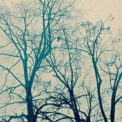 Birds & Trees Nr. 7 aus 12