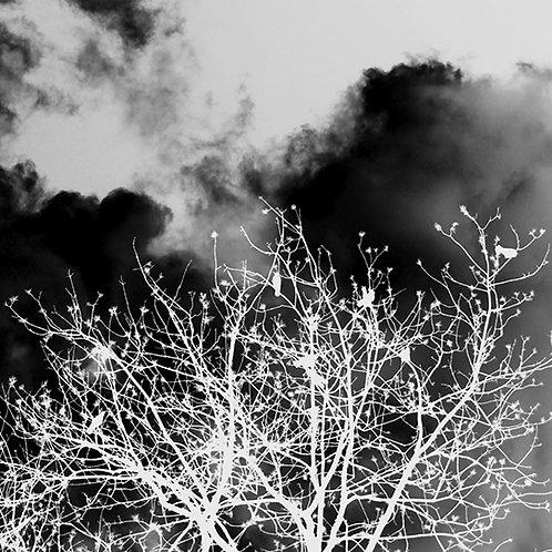 Birds & Trees Nr. 4 aus 12