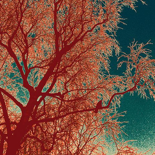 Birds & Trees Nr. 1 aus 12