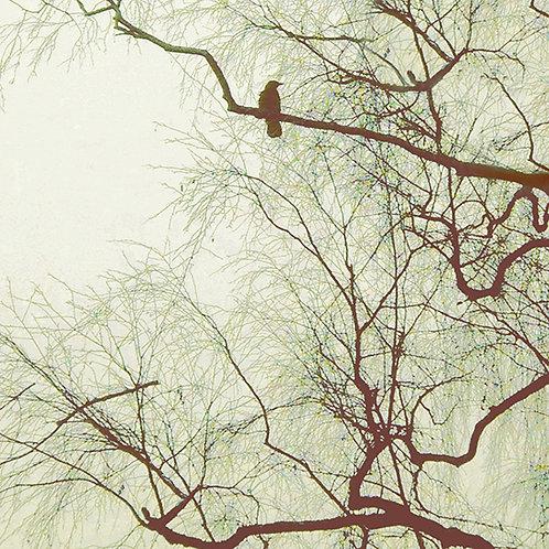 Birds & Trees Nr. 2 aus 12