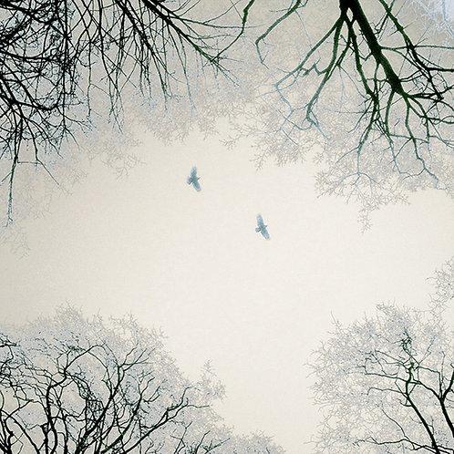 Birds & Trees Nr. 11 aus 12