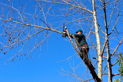 Inspect and Trim Branches